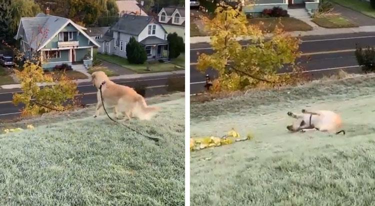 dog sliding down hill