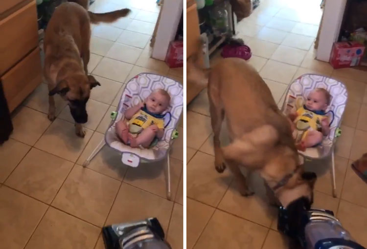 dog protecting baby from vacuum